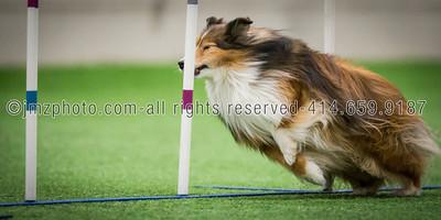 Dog Agility Trials_20131215-92