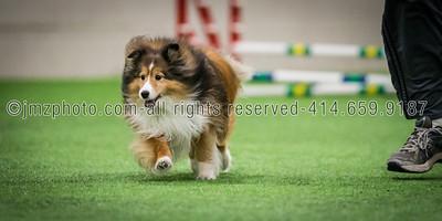 Dog Agility Trials_20131215-90