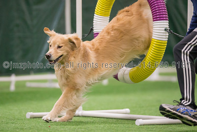 Dog Agility Trials_20131215-35