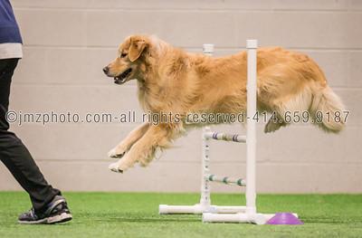 Dog Agility Trials_20131215-30