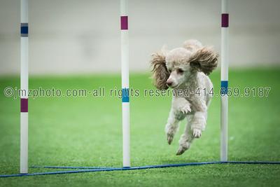 Dog Agility Trials_20131215-162