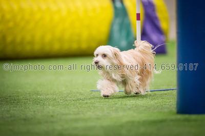 Dog Agility Trials_20131215-58