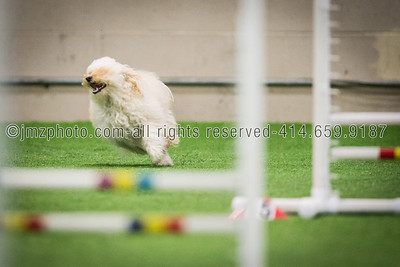 Dog Agility Trials_20131215-115