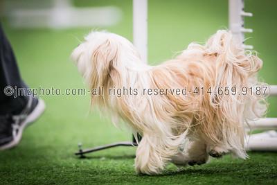 Dog Agility Trials_20131215-68