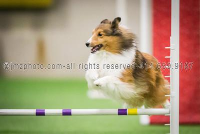 Dog Agility Trials_20131215-132
