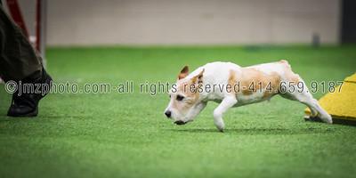 Dog Agility Trials_20131215-80