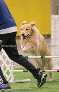 Dog Agility Trials_20131215-27