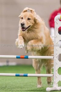 Dog Agility Trials_20131215-31