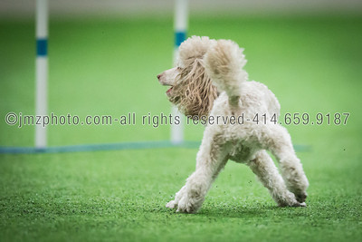 Dog Agility Trials_20131215-156