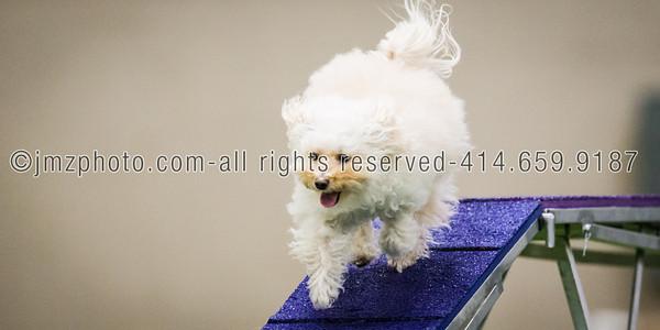 Dog Agility Trials_20131215-122