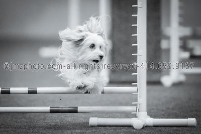 Dog Agility Trials_20131215-64