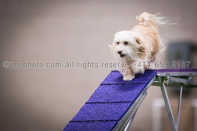 Dog Agility Trials_20131215-67