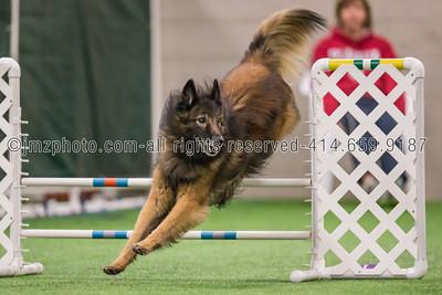 Dog Agility Trials_20131215-48