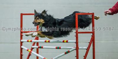 Dog Agility Trials_20131215-50