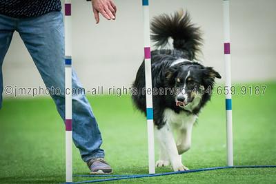 Dog Agility Trials_20131215-177
