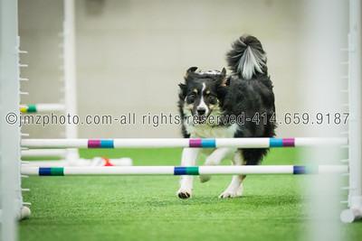 Dog Agility Trials_20131215-178