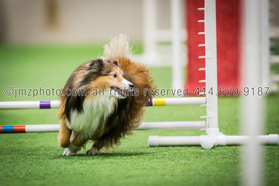 Dog Agility Trials_20131215-103