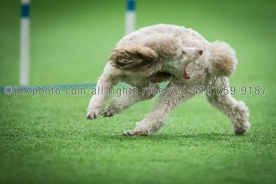 Dog Agility Trials_20131215-153