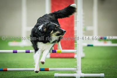 Dog Agility Trials_20131215-180