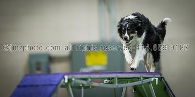 Dog Agility Trials_20131215-181