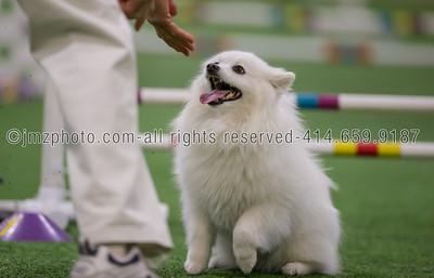 Dog Agility Trials_20131215-2