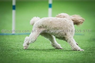 Dog Agility Trials_20131215-151