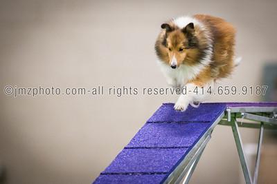Dog Agility Trials_20131215-135