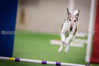 Dog Agility Trials_20131215-69