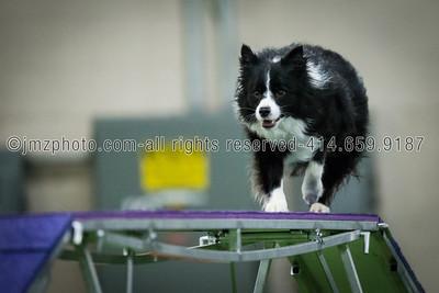 Dog Agility Trials_20131215-190