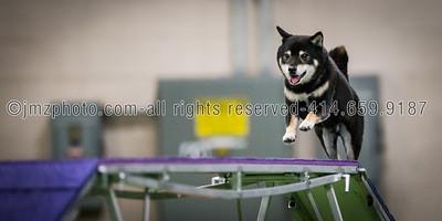 Dog Agility Trials_20131215-75
