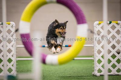 Dog Agility Trials_20131215-52