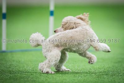 Dog Agility Trials_20131215-154