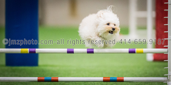 Dog Agility Trials_20131215-119