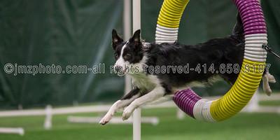 Dog Agility Trials_20131215-15