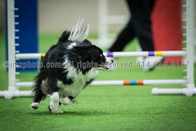 Dog Agility Trials_20131215-187