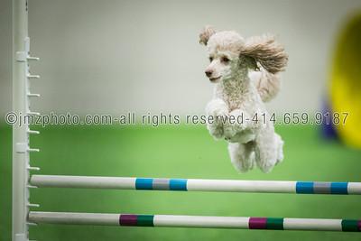 Dog Agility Trials_20131215-166