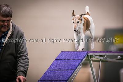 Dog Agility Trials_20131215-72