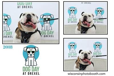 Dog Day at Drexel