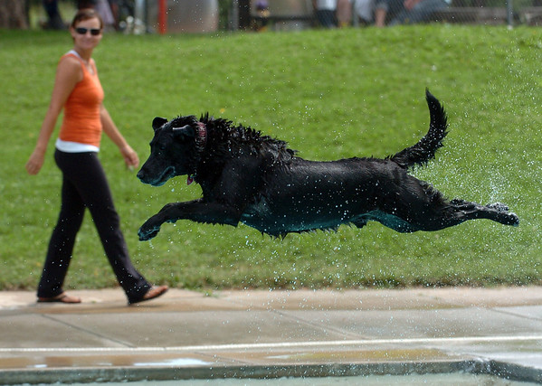"Jed, owned by Peter Lowell, shows off his diving form.<br /> Dogs and owners were able to have some wet fun during Dog Dayz at Scott Carpenter Pool in Boulder on Sunday.  Dog Dayz will continue through September 7, check  <a href=""http://www.BoulderParks-Rec.org"">http://www.BoulderParks-Rec.org</a> for the  daily schedule.<br /> Cliff Grassmick / August 23, 2009"