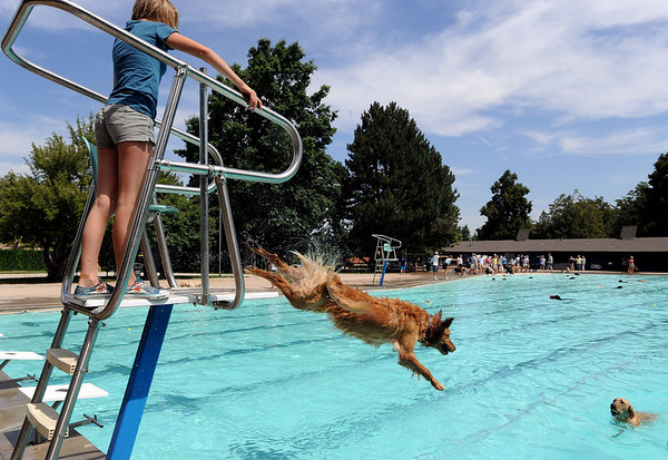 """Gracie Harding gives Ellie the dog the word to jump from the lifeguard tower.<br /> Dogs and owners were able to have some wet fun during Dog Dayz at Scott Carpenter Pool in Boulder on Sunday.  Dog Dayz will continue through September 7, check  <a href=""""http://www.BoulderParks-Rec.org"""">http://www.BoulderParks-Rec.org</a> for the  daily schedule.<br /> Cliff Grassmick / August 23, 2009"""
