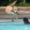 "It was a free for all dogs, no tennis ball was safe.<br /> Dogs and owners were able to have some wet fun during Dog Dayz at Scott Carpenter Pool in Boulder on Sunday.  Dog Dayz will continue through September 7, check  <a href=""http://www.BoulderParks-Rec.org"">http://www.BoulderParks-Rec.org</a> for the  daily schedule.<br /> Cliff Grassmick / August 23, 2009"
