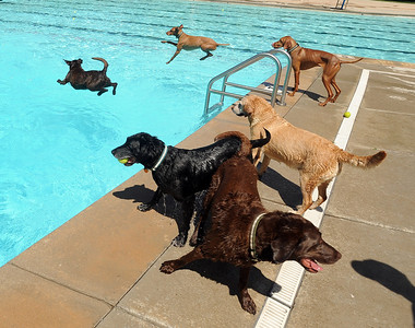 The first day of the annual Dog Dayz at Scott Carpenter Pool was held on Wednesday. For more photos and a video of the dogs, go to www.dailycamera.com. Cliff Grassmick / August 18, 2010
