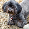16 04-09 Dog Daze 4036