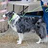 16 04-09 Dog Daze 4032