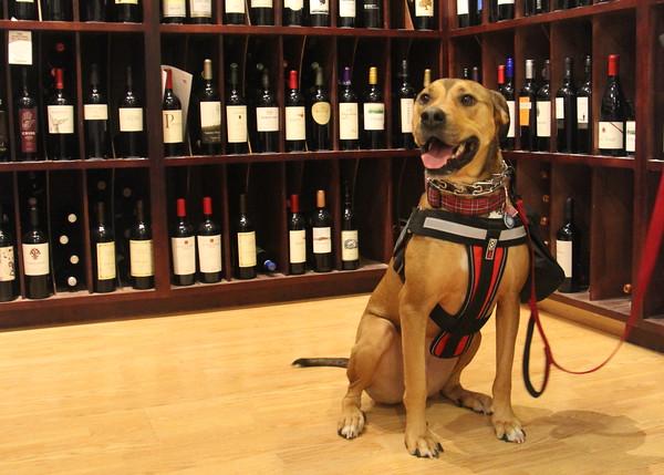 Dog Friendly Wine Tasting 3/14/15