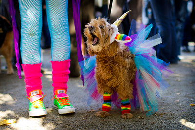 Dog Parade 2012