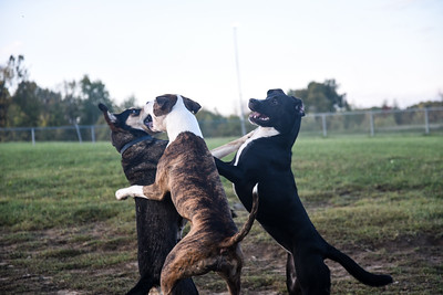 dogpark (9 of 10)