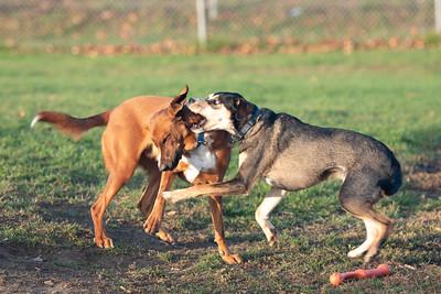 DogPark-10