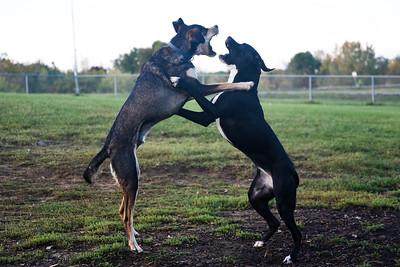 dogpark (8 of 10)