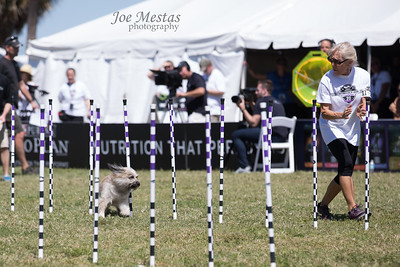 2017_Purina_Competition-16